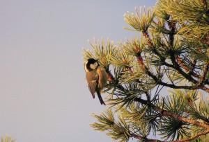 Birdlife on Balnafettach Farm